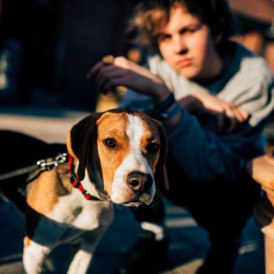 Bestival 2015 adds Rat Boy, Eagulls, LA Priest & more